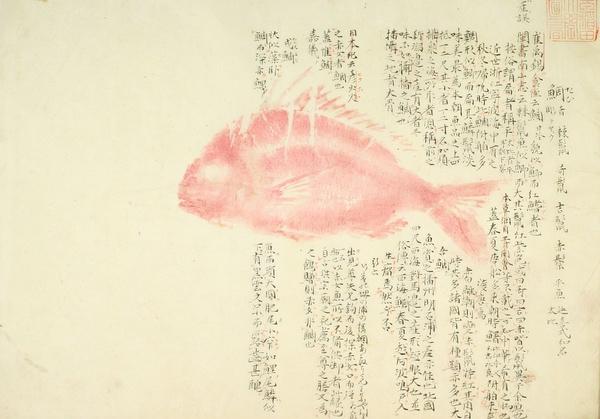 大鱼曲谱卡林巴